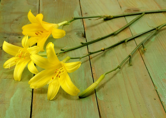 image of three beautiful lilies on a wooden table closeup