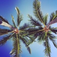 palm trees/beach