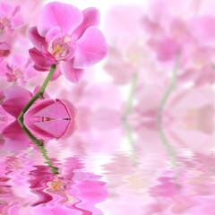 les orchidée...