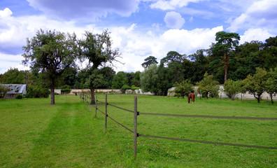 Un cheval dans son enclos