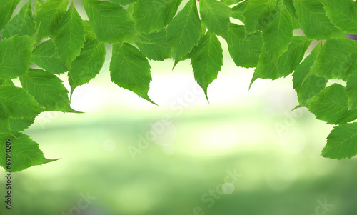canvas print picture Beautiful nature background