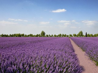 Landcape Provence