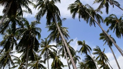 Palm Trees Blowing in the Wind at Sea in Thailand. Speed up.