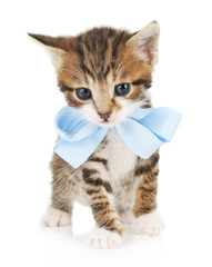 Cute little kitten with bow isolated on white