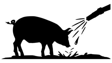 pig wash center - Schweine Waschstation - ratio 16 to 9 - g1325