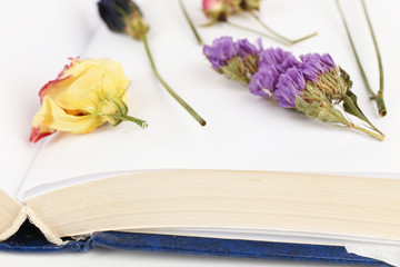 Dry up plants on book isolated on white