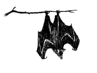 upside down bat