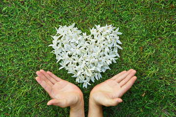 hands holding white flowers arranged as heart shape