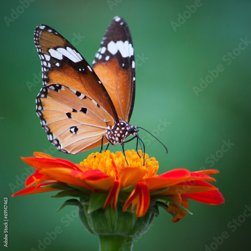 Deurstickers Vlinder Butterfly on a flower