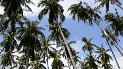 Palm Trees Blowing in the Wind near the Sea in Thailand. Speed