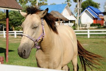 Single horse in farm