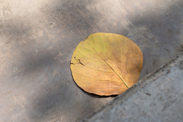 Yellow leave on the ground