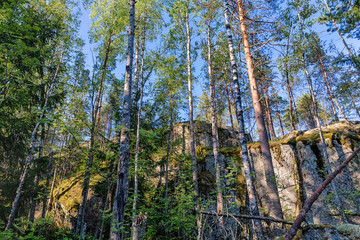 forest with high cliffs