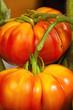 Coeur de Boeuf Tomaten kurz vor der Ernte