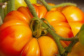 Coeur de Boeuf Tomate in einer Nahaufnahme