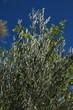 Feuillage vert et ciel bleu