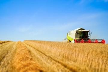 Getreideernte, Mähdrescher im Kornfeld