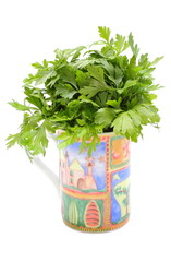 Bunch of fresh and natural parsley in colorful cup.