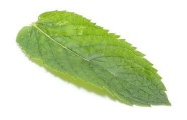Fresh green leaf of mint on white background