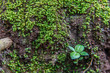 little plants on ground  with green moss