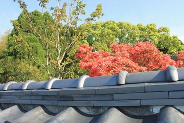 瓦塀と躑躅と新緑