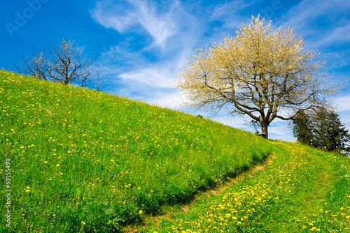 canvas print picture Blumenwiese und Kirschbaum