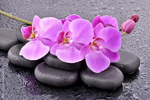 Storczyki na kamieniach bazaltowych