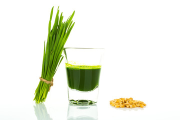 Shot glass of wheat grass with fresh cut wheat grass and wheat g