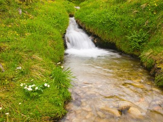 Brook in fresh green Alps meadow, rainy weather