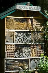 maison des insectes