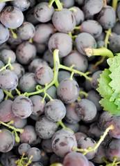 Uva nera, dettaglio