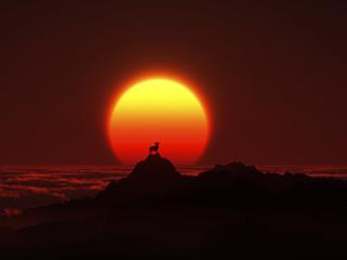 日の出と羊