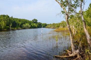 mangroves in Phu Quoc island, Kien Giang, Mekong delta. Phu Quoc