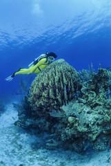 Caribbean Sea, Belize, a diver close to a vase sponge