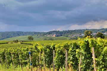 Rheingau, Abtei St. Hildegard  (Sommer 2014)