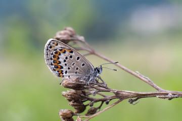 Farfalla in primo piano su remetto sfondo verde