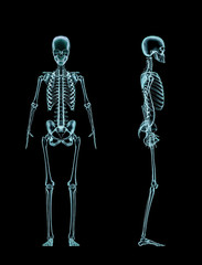 Female skeleton full body x-ray