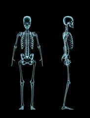 Female skeleton full body x-ray