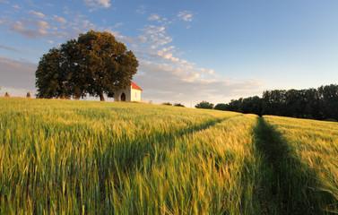 Slovakia summer countryside