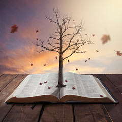 Old tree in Bible