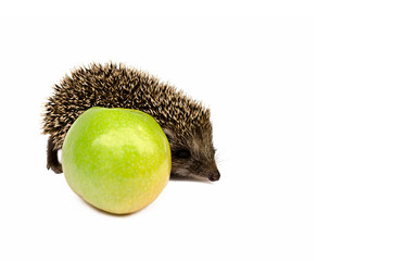 hedgehog with green apple on a white background