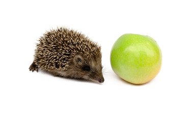 hedgehog with green apple