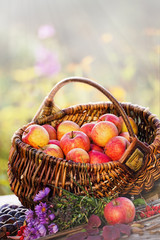 Apples in a Basket, Autumn