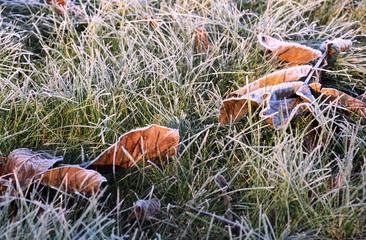 Fallen Leaves on Green Snowy Grass