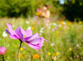 Pré fleuri et cueillette d'un bouquet de fleurs des champs