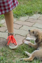 cane e scarpe