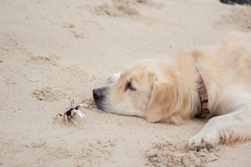 Crab little fun with the dog