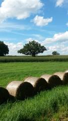 Feld Getreide