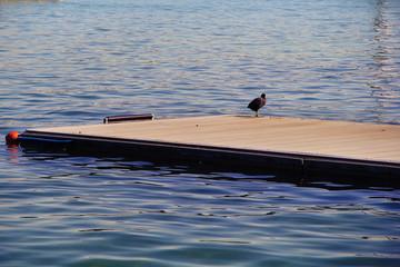 bird on the quay