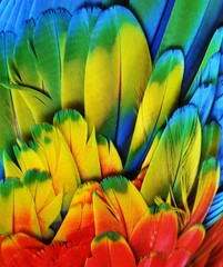 Macaw Feathers (Multi-Colored)